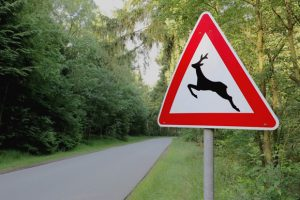accidentes animales